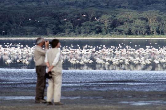Flamingo-Beobachtung am Lake Nakuru